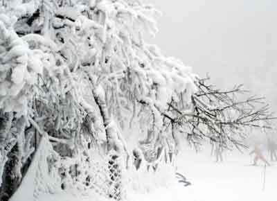 雪中松树图片手绘