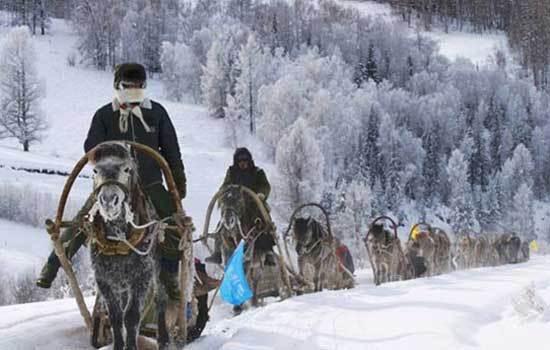 提到赏雪,大多数人第一反应就是去东北,哈尔滨、长春、漠河,但新疆阿勒泰的雪景比起东北一点也不差。来到阿勒泰,当然要前往喀纳斯赏雪。冬季的喀纳斯银装素裹、白雪皑皑,冰封的湖面与挂着雾凇的白桦林构成了一则最美的冬日童话。而距离喀纳斯约100公里的禾木村,又是另一种美。这里的村落中,有炊烟袅袅、覆盖着厚厚白雪的小屋,有赶着马、拉着雪犁的图瓦人,村落、高山和树林相得益彰,构成了一幅水墨画,因此这里又叫水墨禾木。    盘前村是金华海拔最高的山村,坐落在海拔1312米北山最高峰金盘峰的脚下,地处江南,却犹如北