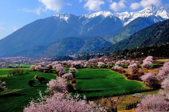 桃花沟,位于西藏自治区林芝地区林芝县小陇山林业实验局东岔林场的