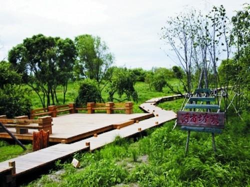 植物 湿地/金河湾湿地植物园