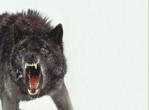 《人狼大战》