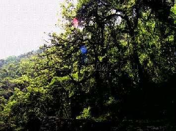乌龙国家森林公园