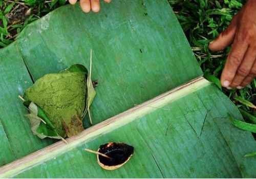 用来提炼可卡因的新鲜古柯叶是村民食物必不可少的调味品