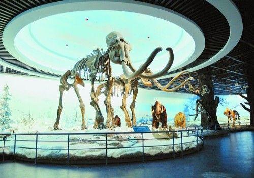 大庆博物馆内景观