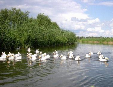 白鱼泡湿地