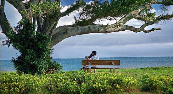 北海银滩榕树下