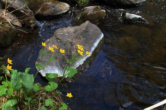 茅兰沟溪水