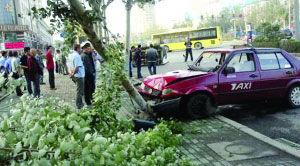 出租车撞歪大树