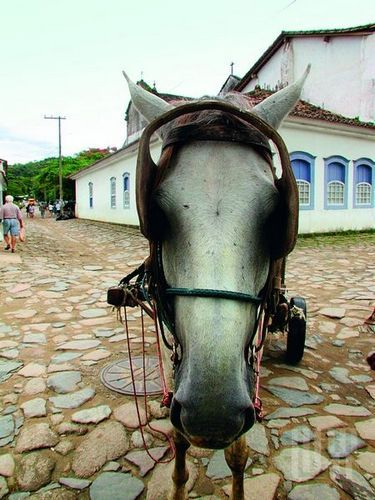 驴子是唯一的交通工具