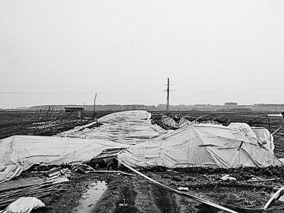 铁力市工农乡新一村遭受雹灾的蔬菜大棚