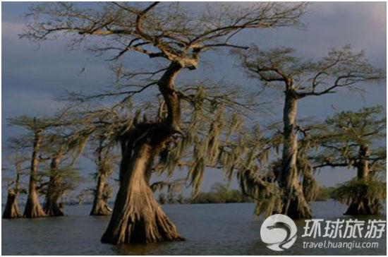 路易斯安那:曼查克湿地
