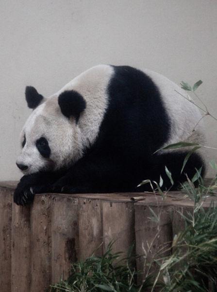 苏格兰 爱丁堡动物园
