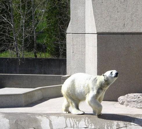 加拿大多伦多 多伦多动物园
