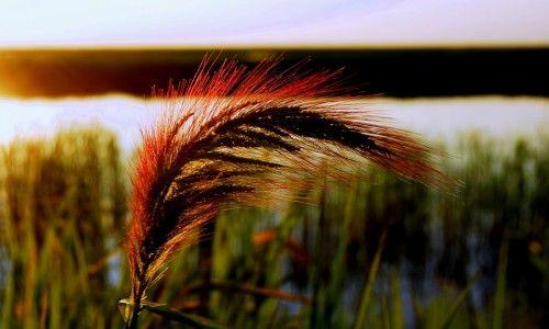 红旗农场自然风光