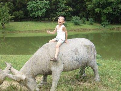 骑着动物的孩子