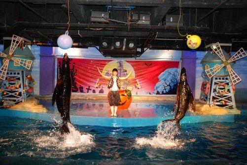 哈尔滨极地馆内动物表演