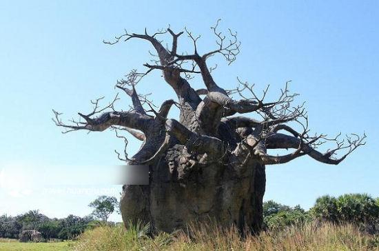 种十棵树吃一辈子