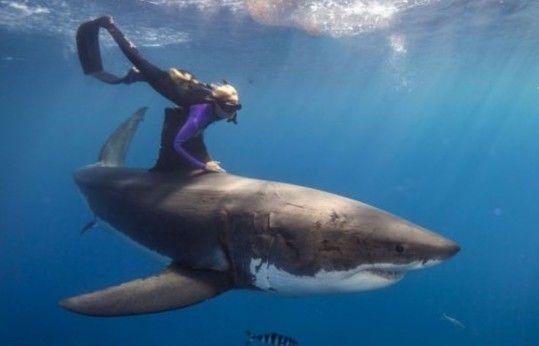 美国美女与鲨鱼共舞十分放松