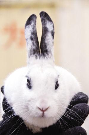 小白兔头图片;