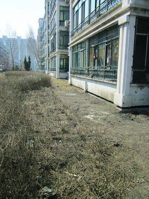 哈尔滨海富康城楼后 百棵水蜡惨遭齐根砍(图)
