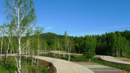 大亮子河国家森林公园红松驰名中外