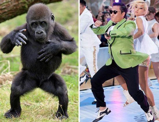 荷兰动物园大猩猩模仿鸟叔