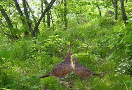 梅花河狩猎场野生动物