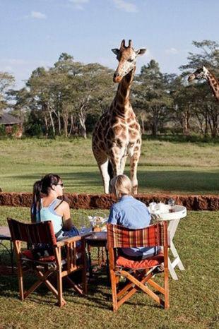 这里有只长颈鹿和这个庄园中的鸟儿等其他动物相处的很融洽,更会在你