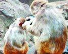 猴子玩自拍上瘾各地和猴有关的奇闻趣事