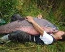 盘点捕获的巨型鱼