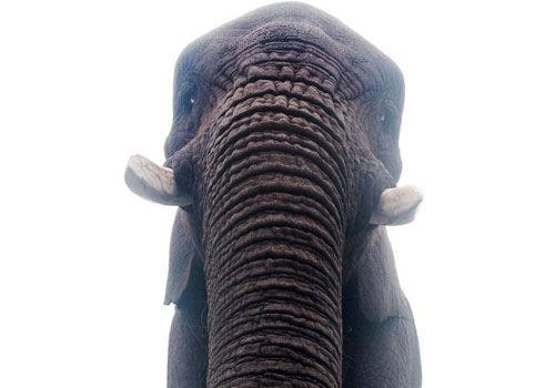 聪明大象捡游客掉落手机玩自拍