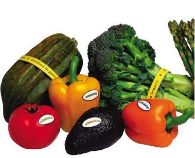 夏天的瓜果蔬菜简笔画