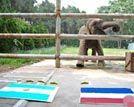济南动物园象半仙预测世界杯