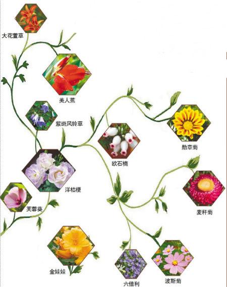 太阳岛花卉园还有观赏南瓜