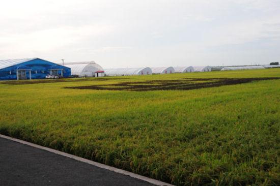 发展优势与面向市场相结合,农业增效与农民增收相结合,点线面相结合