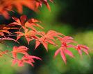 京城14个最佳红叶观赏地