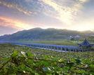 探神秘中国南方葡萄沟