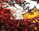 九月南京最美的十个地方