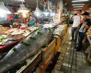 青岛渔民捕获412斤重箭鱼王体长3.06米