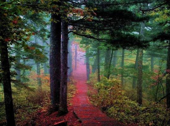 五营国家森林公园-伊春赏古树怪石两日游线路推荐