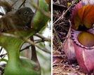 5种会吃动物的植物