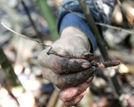 泸州发现长得像虫草的奇特物种细看似僵蚕