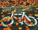 揭秘上海人过秋天必做的八件事