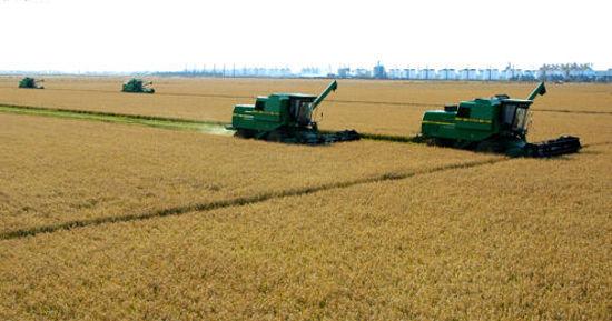 机械收获水稻的情景