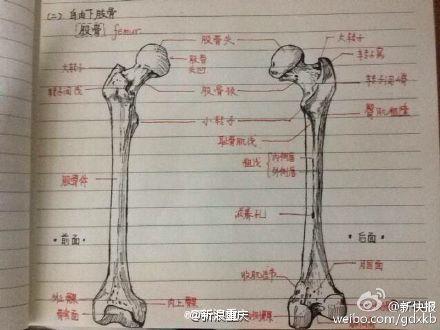 组图:军校学霸手绘骨骼图