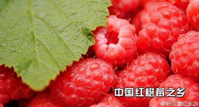 尚志中国红树莓之乡