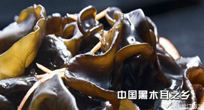 尚志中国黑木耳之乡